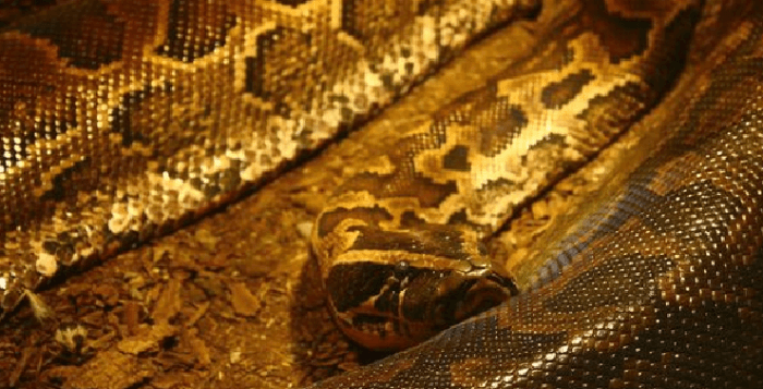 KwaZulu-Natal bus driver's apparent snake panic kills four